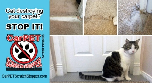 Cats Clawing Carpet | Carpet Review