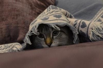 fear-in-cats