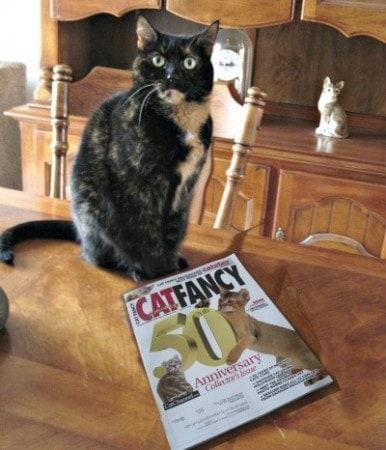 liquid food for sick cats