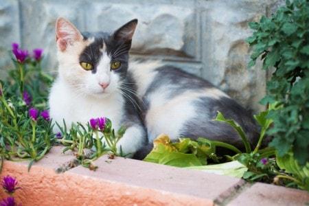 cat-in-flower-bed