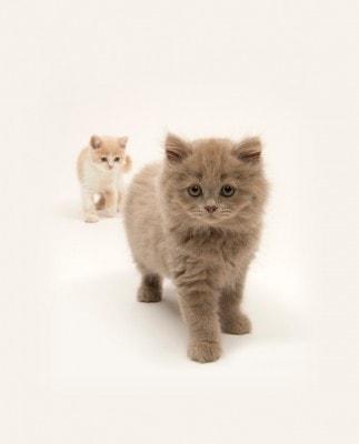 Pure-cat-portraits