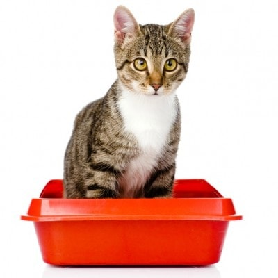 cat straining to poop