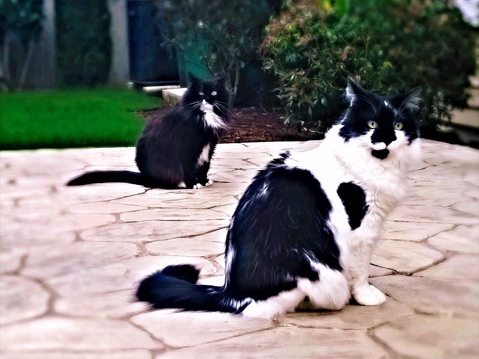 Prednisolone For Cats Appetite