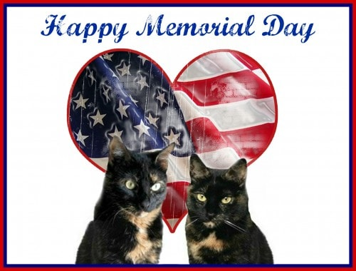 memorial-day-cats