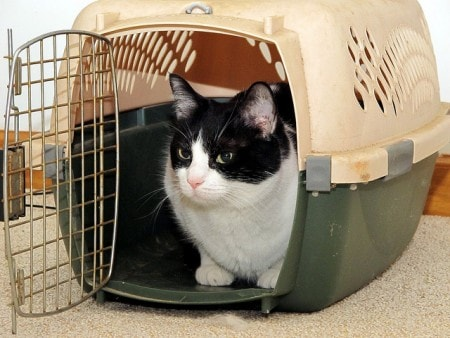 Taking Your Cat In A Carrier To The Vet Meme
