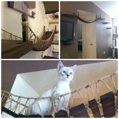 how to build a cat bridge