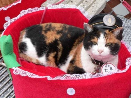 tama-stationmaster-cat
