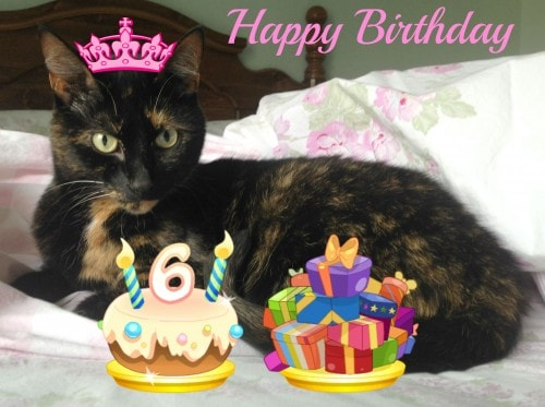 birthday-cat