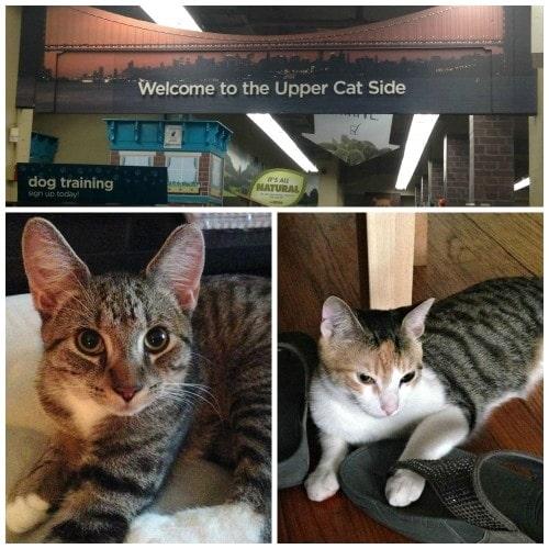 new-york-city-cats