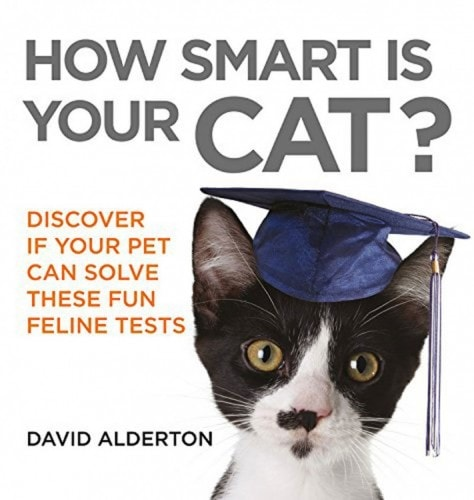 how-smart-is-your-cat