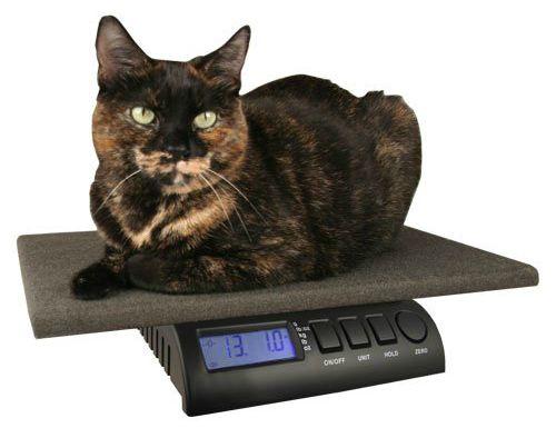 tortoiseshell-cat-on-scale