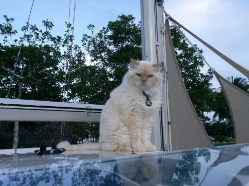 cats-on-boats