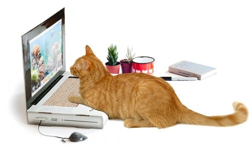 cat-scratch-laptop-toy