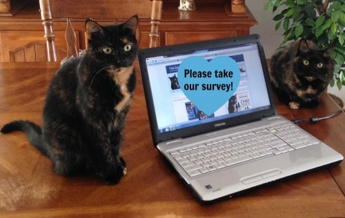 survey-cats