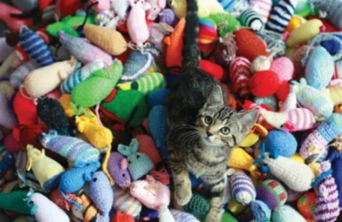 knitting-kittens