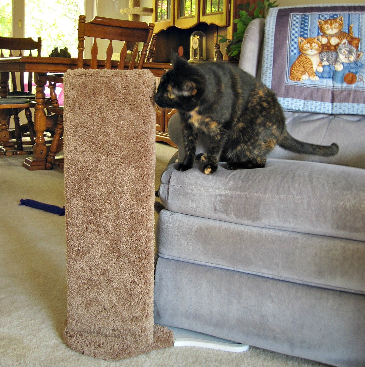 Review Furniture Protector Cat Scratcher By Kool Kitty Toys The Conscious Cat
