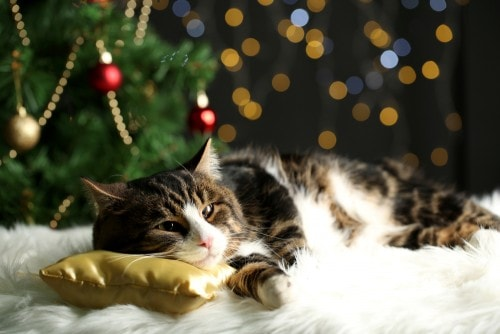 christmas-tree-cat