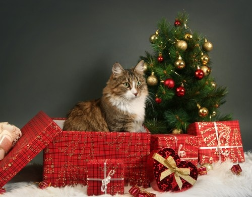 Last Minute Holiday Shopping Ideas For Cat Lovers The Conscious Cat
