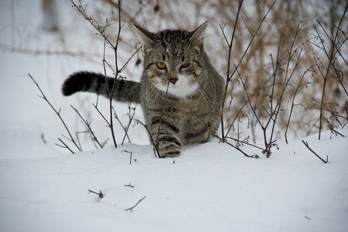 Help Feral And Stray Cats In Cold Weather The Conscious Cat