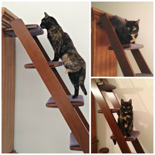 Cat Ladder Review Catification At Its Best The