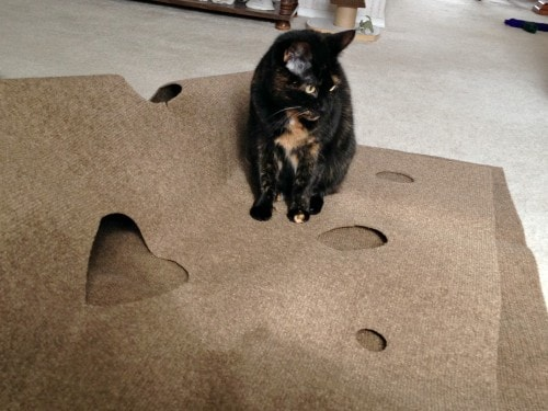 Cat keeps eating carpet