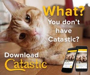 Catastic Banner Ad