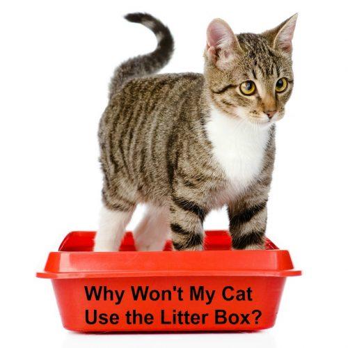 My Cat Won T Use The Litter Box