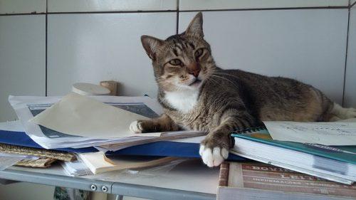 cat-college