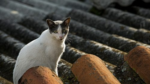 feral-cats-new-york-city