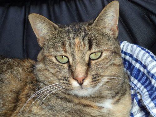 Liver Disease Cat Food