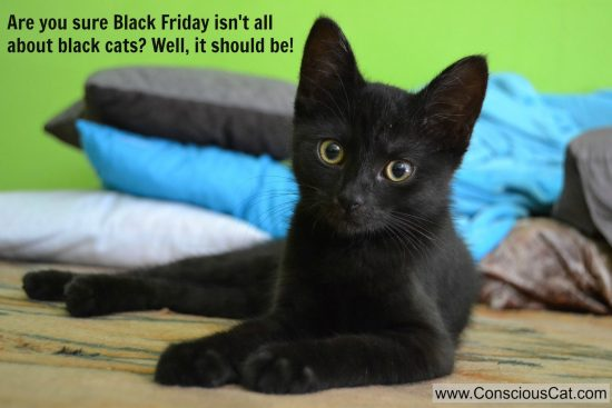 Black Friday Deals For Cat Lovers The Conscious Cat