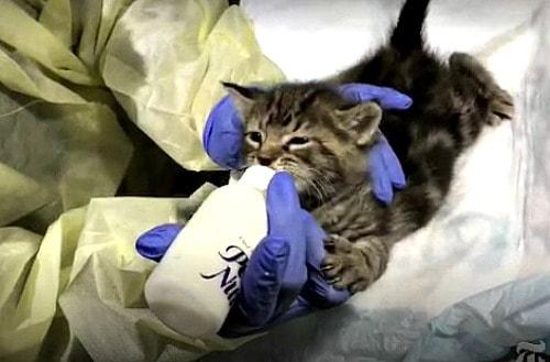 kitten-nursery
