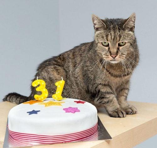 nutmeg-31-year-old-cat