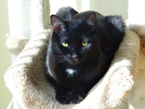 cat-behavior-study