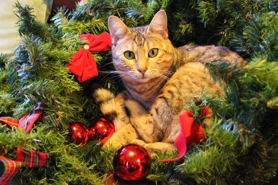 Christmas Cat Photos The Conscious Cat