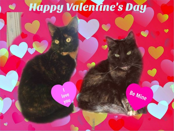 Happy Valentines Day 2017 The Conscious Cat