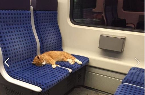 cat-on-train