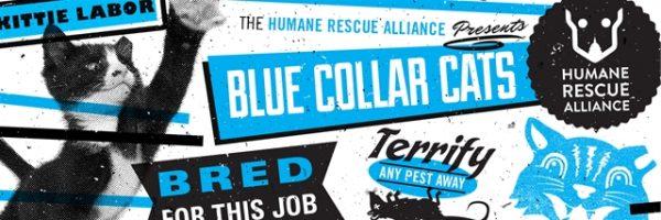 blue-collar-cats