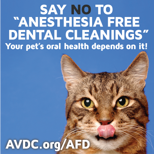 Anesthesia Free Cat Teeth Cleaning