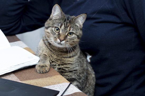 cat-desk