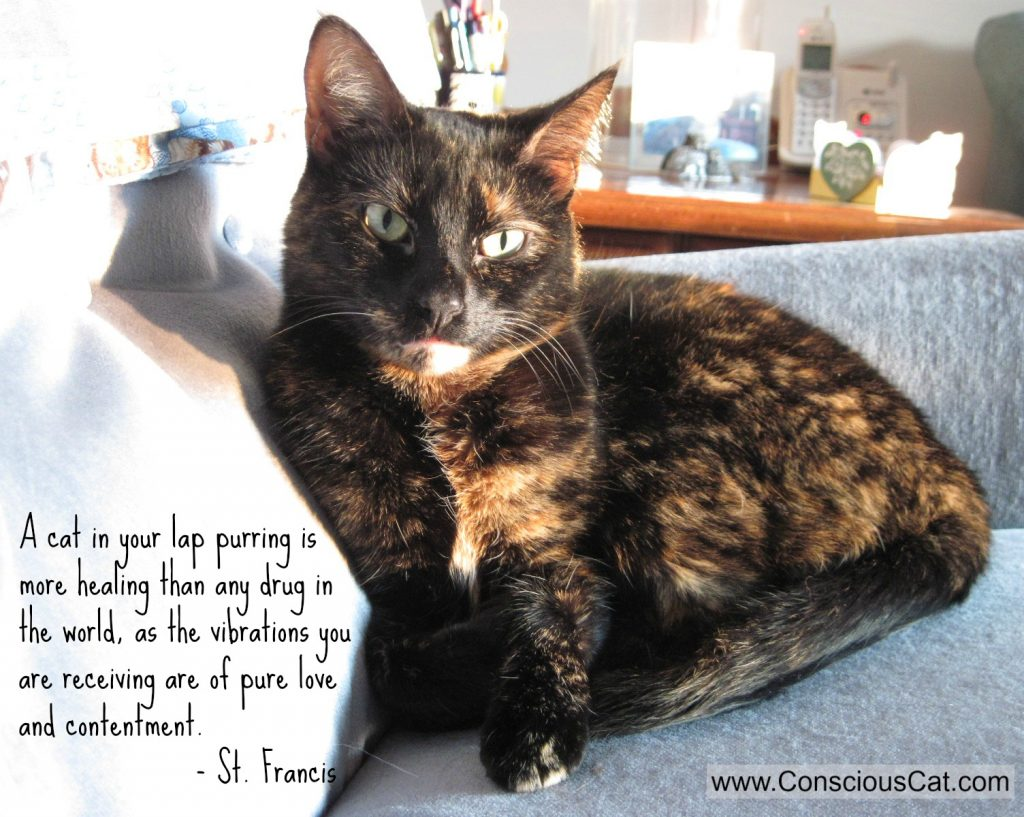 Sunday Quotes The Healing Power of Purring