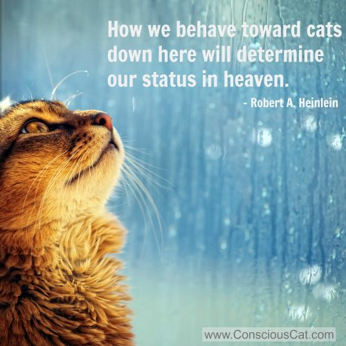 Quotes Of Pictures: Sunday Quotes: Behave