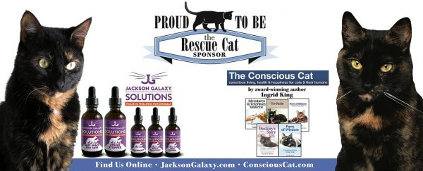 The conscious cat and jackson galaxy solutions are the for Jackson galaxy phone number