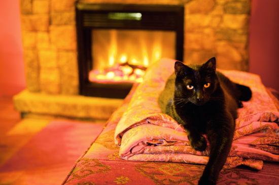 cat-fireplace