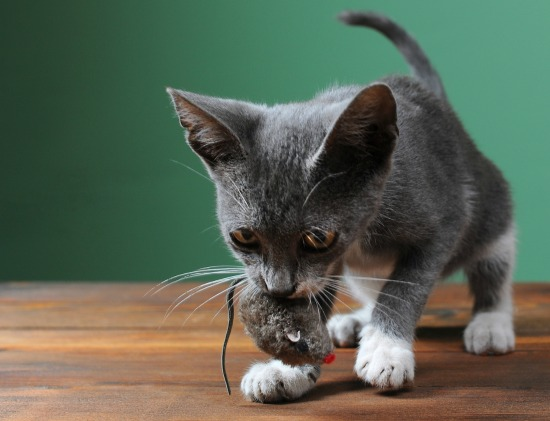Why Does Your Cat Bring You Gifts? - The Conscious Cat
