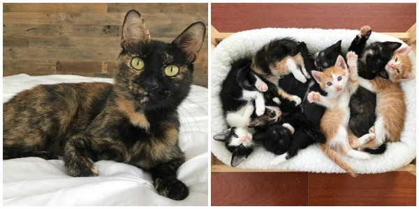 tortie-mom-7-kittens