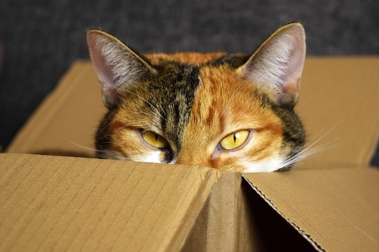 How To Make Moving Less Stressful For Cats