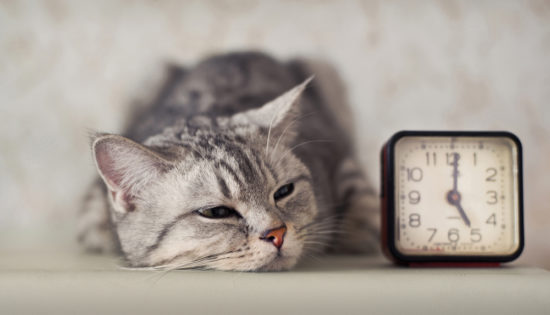 Can Cats Tell Time? - The Conscious Cat