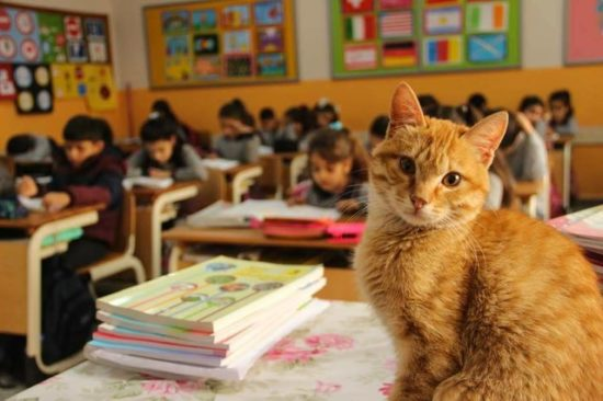 stray-cat-classroom