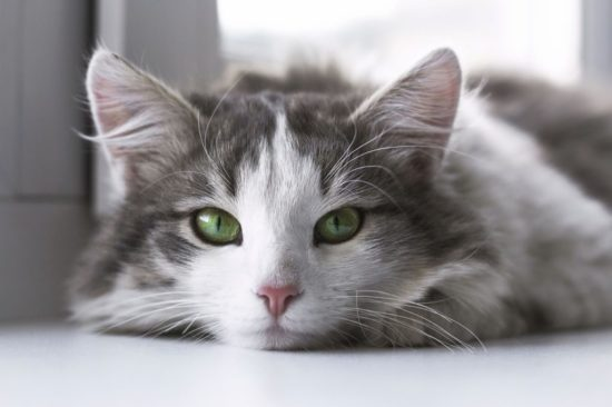 What Does It Mean If Your Cat S Eyes Change Color The Conscious Cat